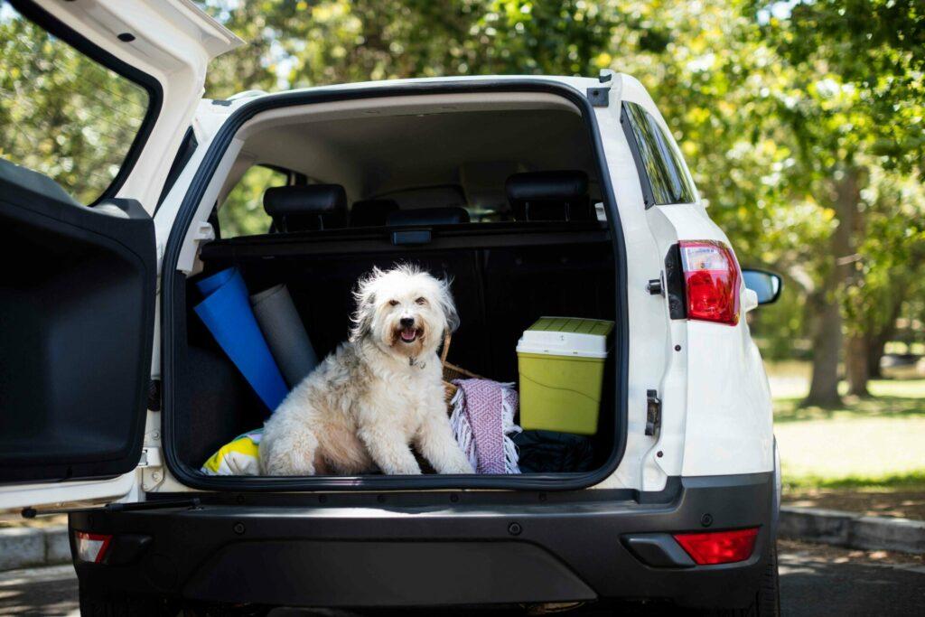 犬 車のトランク