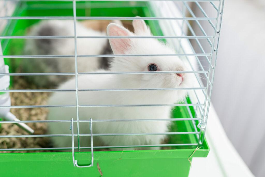 ウサギ ケージ